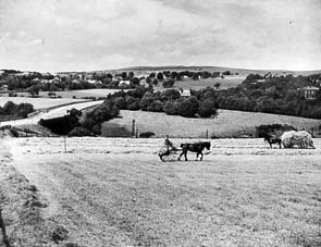 Haymaking in the late 1940s